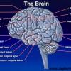 مغز در سه ماه اول زندگی روزانه 'یک درصد' رشد میکند